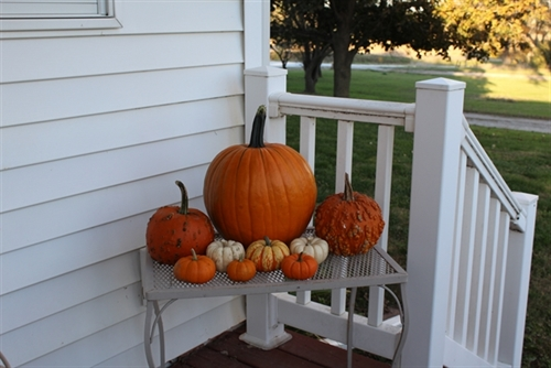 Pumpkin family_resized_2